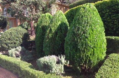 hedges and conifers in elermore vale garden