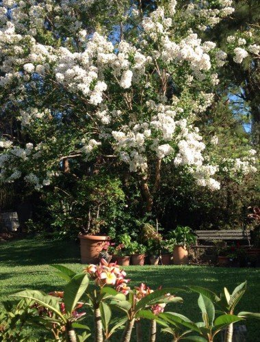tranquil spaced garden with very nice flower tree