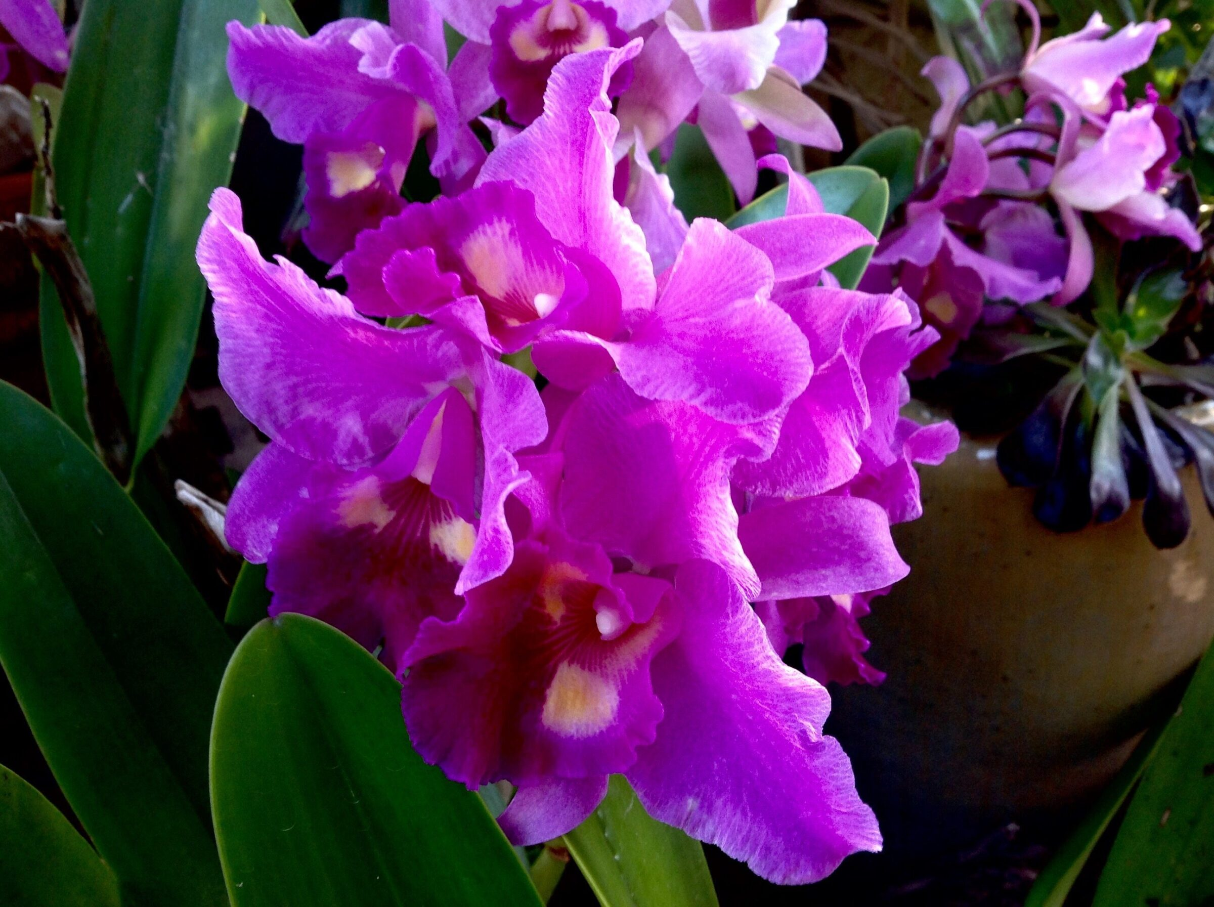 My orchids -